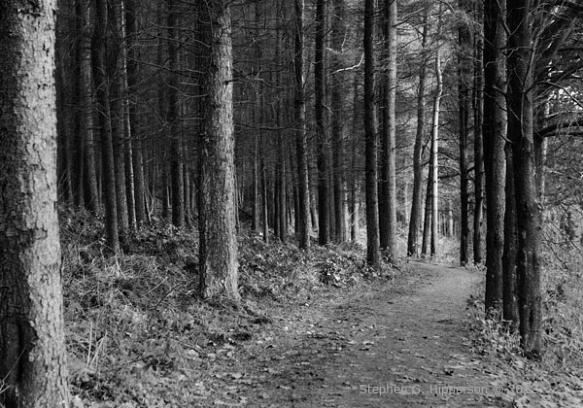 Trees4_MG_9304