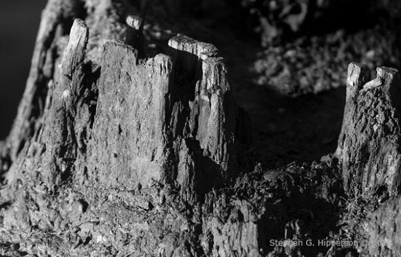 Rocks_MG_0034
