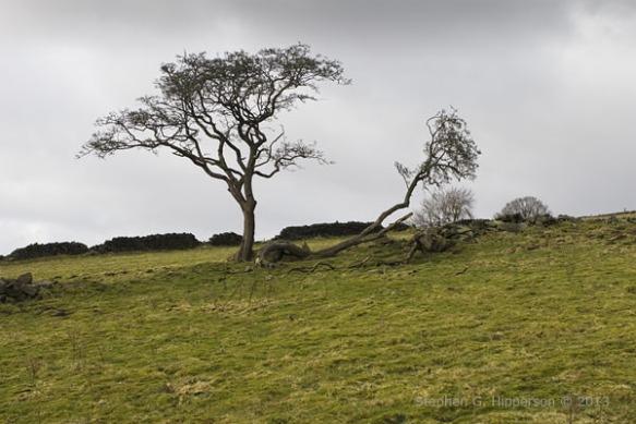 Trees_MG_0490