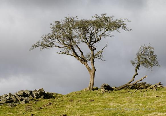 Trees_MG_0494