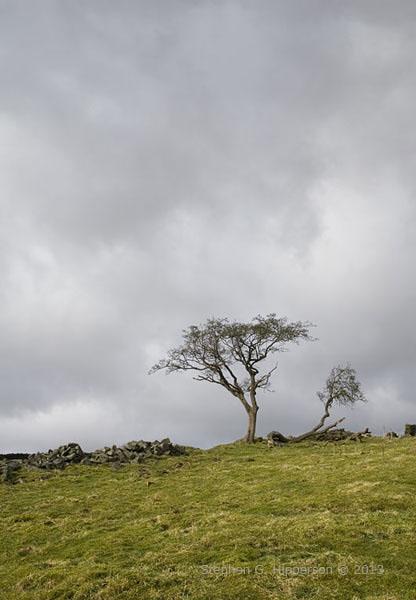 Trees_MG_0495