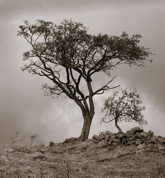 Trees_MG_0497