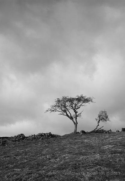 TreesBW_MG_0495