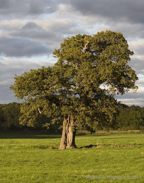 TreeTues_MG_9050