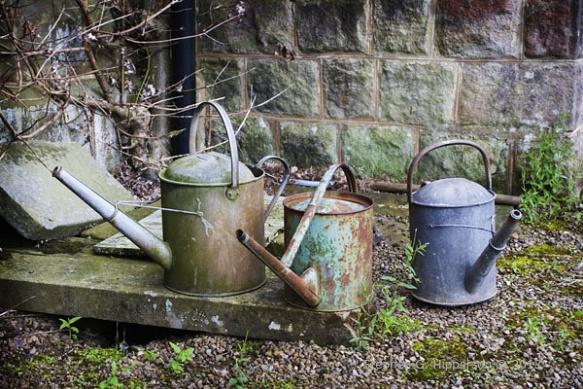 wateringcan_MG_6416