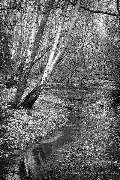 Swamp_MG_0880