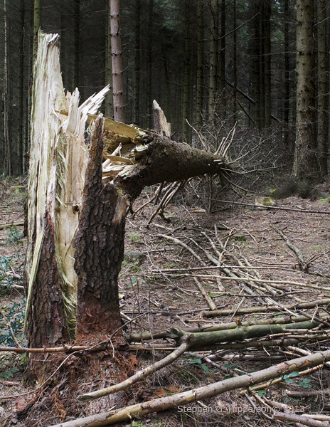 tree_MG_1513