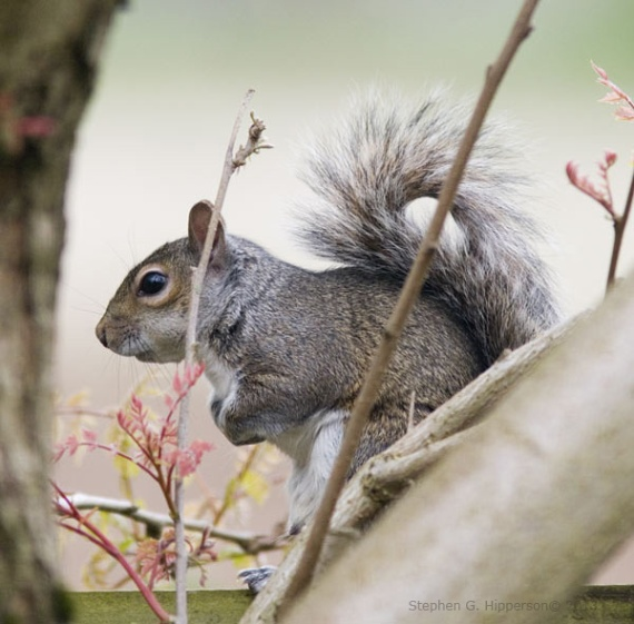 Squirrel_MG_1668