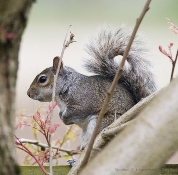 Squirrel_MG_1668