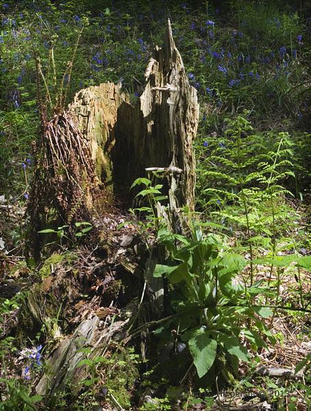 stump_MG_2190