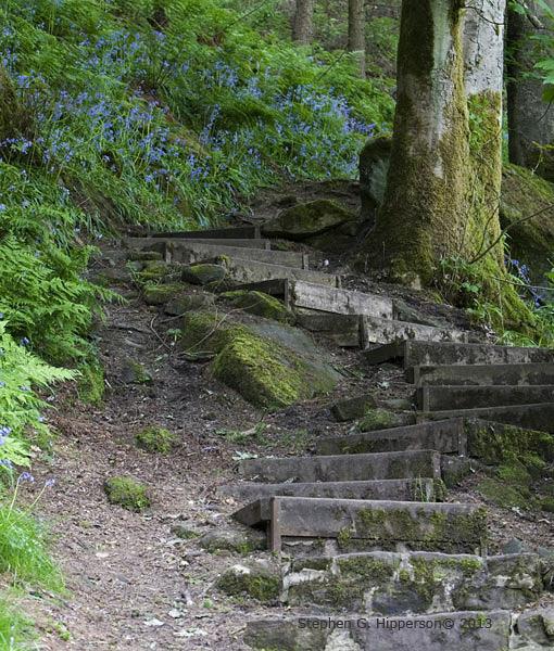 Steps_MG_2438