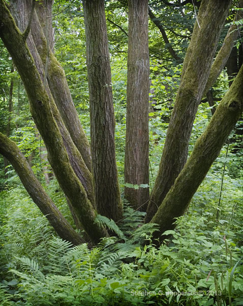 Tree_MG_2703