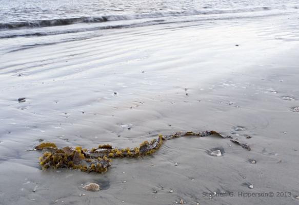 Seaweed_EPV0052