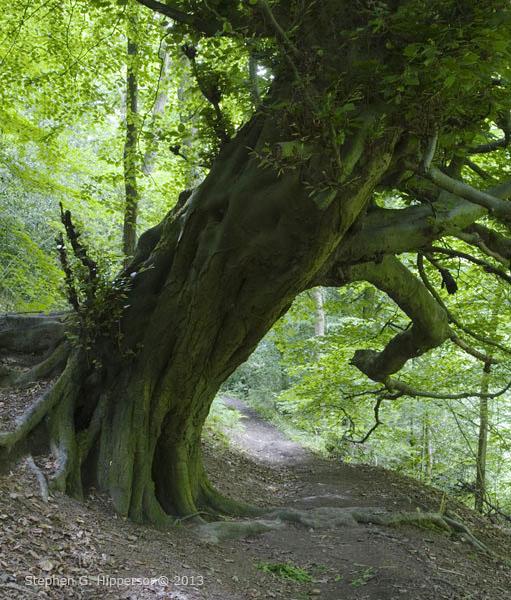 Tree_MG_2724