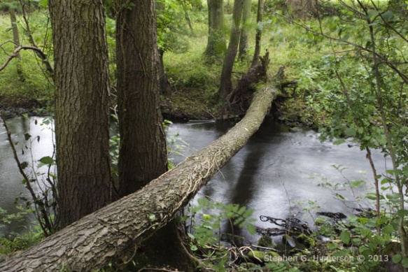 TreeCrossing_MG_3837
