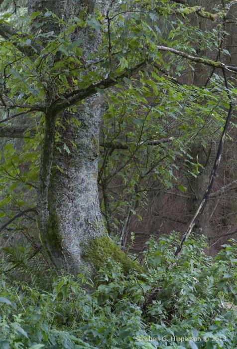 Tree_MG_4105