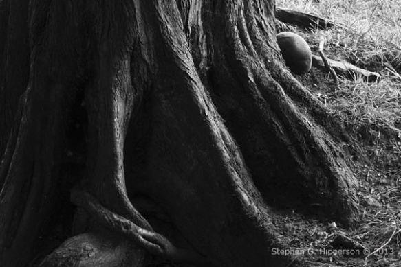 tree_MG_4540
