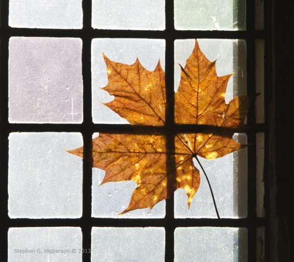 leaf_MG_4753