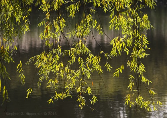 Willow_MG_4928