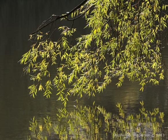 Willow_MG_4930