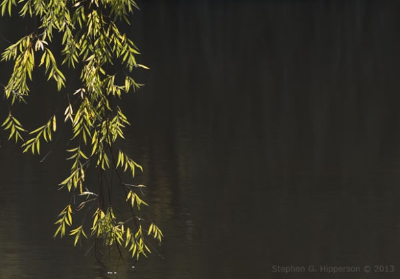 Willow_MG_4931