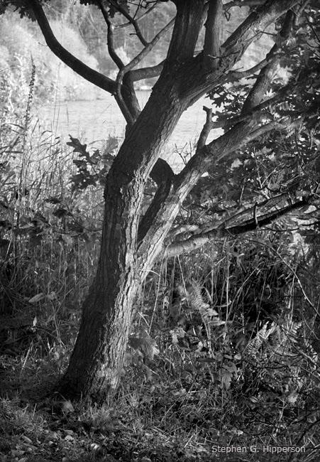 Tree_MG_5264