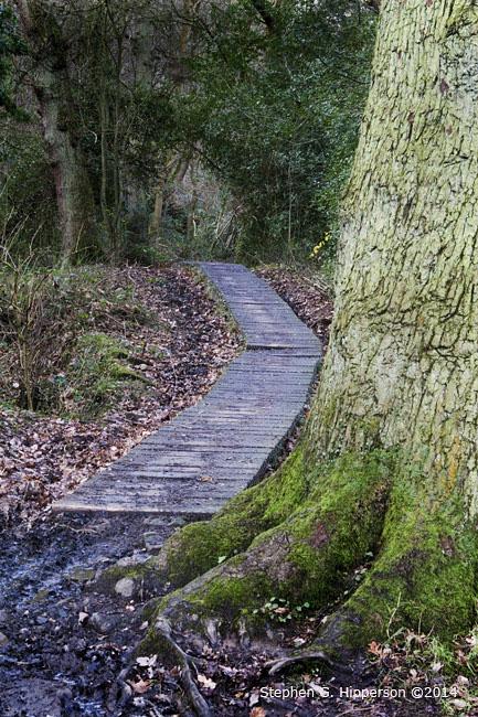 Path_MG_5750