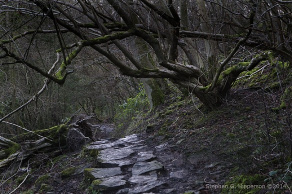 Path_MG_5754