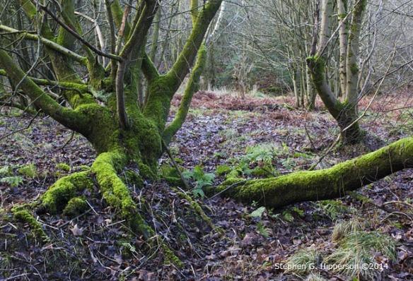 Tree_MG_5756