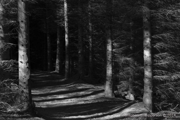 ForestWalk_MG_6691