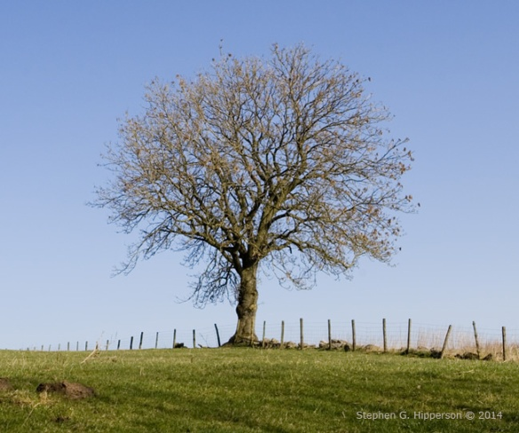Tree_MG_6620