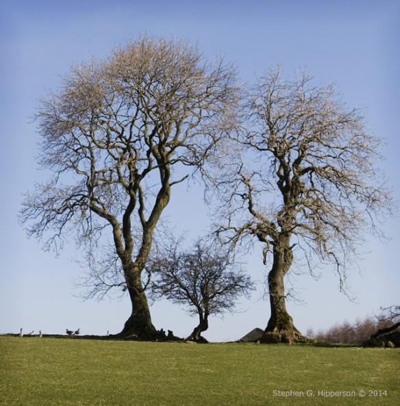 TreeFamily_MG_6626
