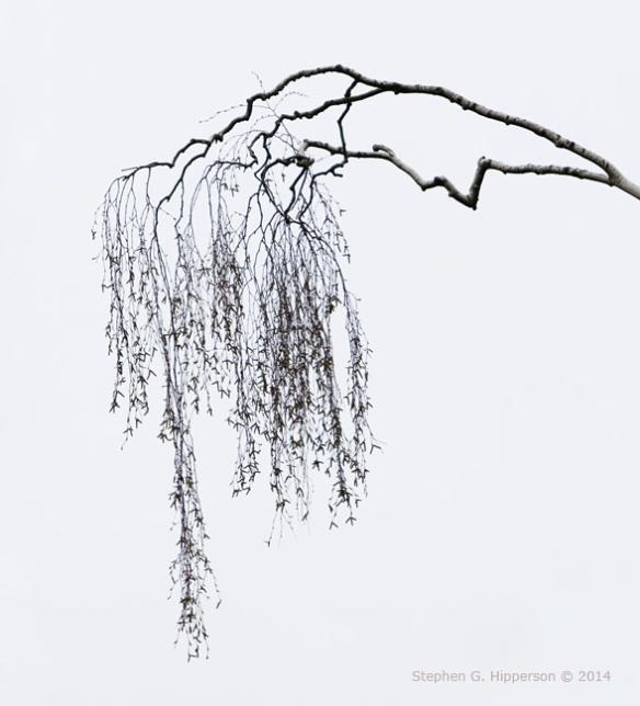 Branch_MG_7132