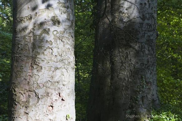 Trees10_MG_7900
