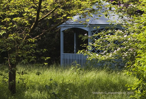 Arbour_MG_8553