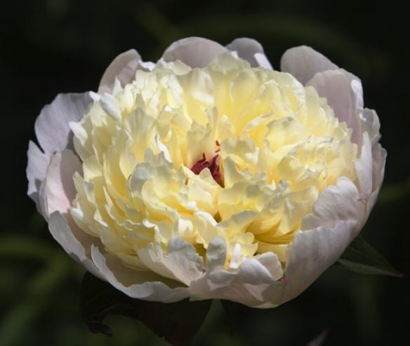 Flower_MG_8535
