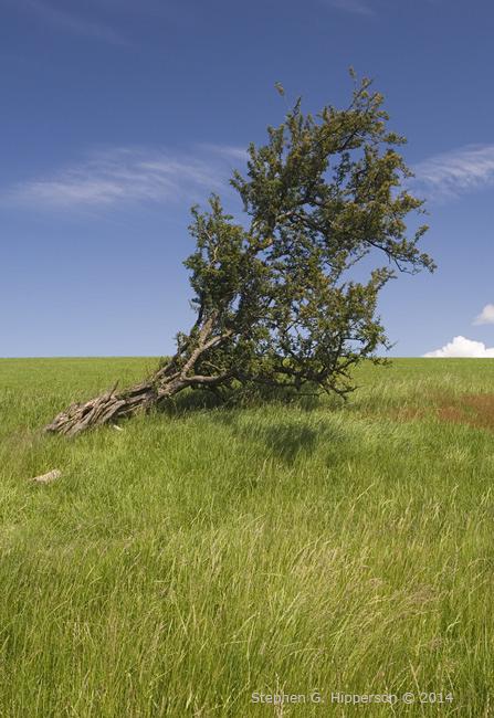 Tree_MG_8709