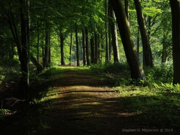 Trees_IMGP0057
