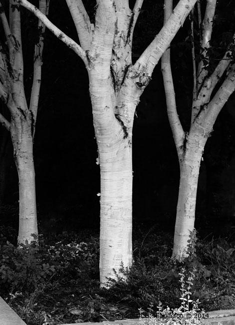 ThreeTrees_MG_8858