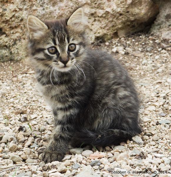 KittenUSER0748