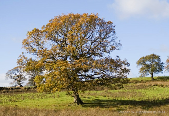 Tree_MG_9934