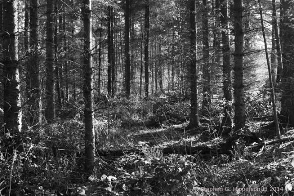 Trees_MG_9897