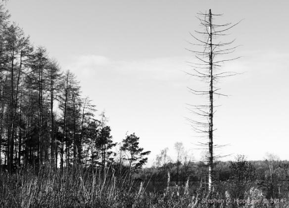 Trees_MG_9905
