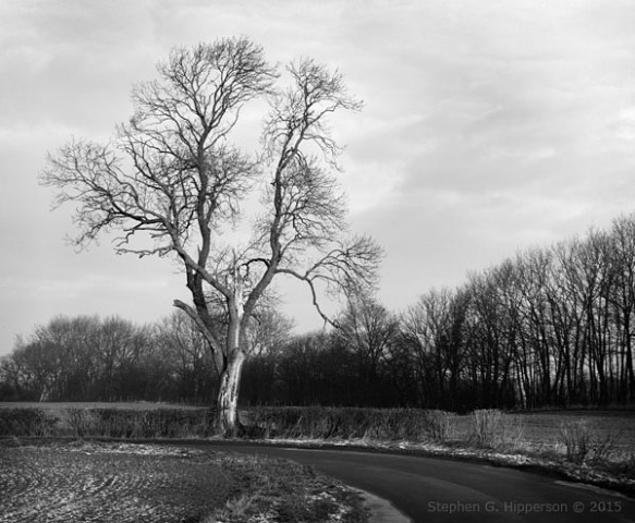 TreeSGH_0954
