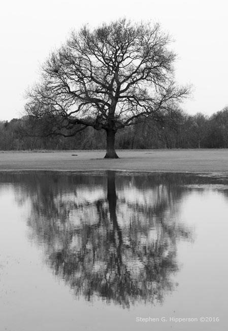 Reflection_MG_1272