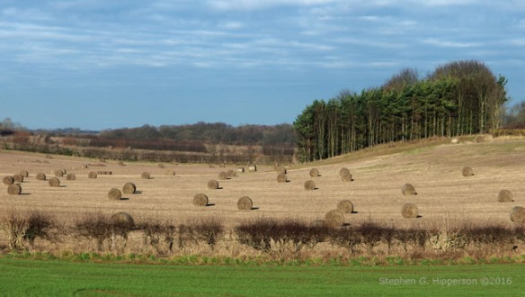 Countryside_SGH_1750