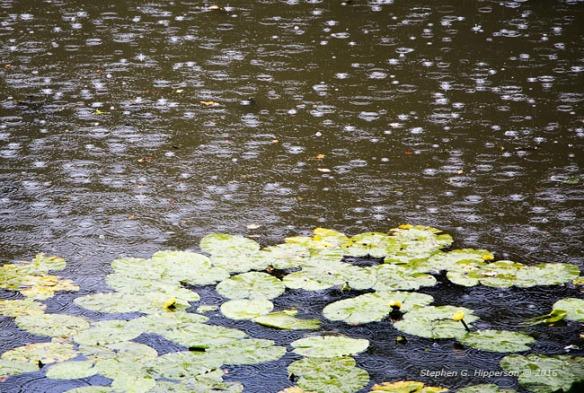 rain_mg_1722-edit