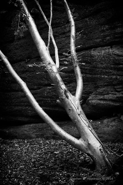 tree_mg_1713-edit