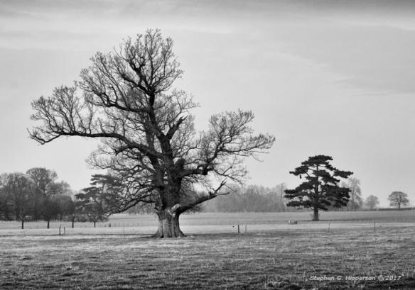 Trees_MG_3258