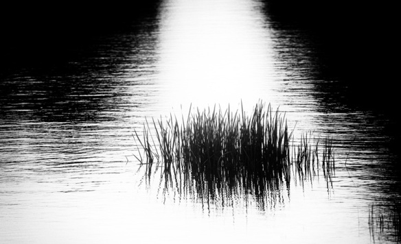 Reeds_MG_4146